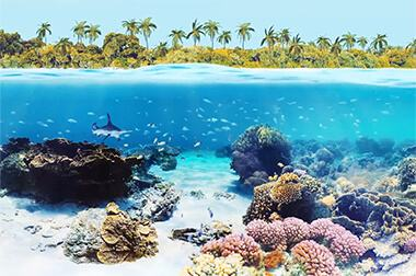 墙面互动投影 - 模拟教学 - 珊瑚海岸 - 维莎道卡数字影像制作有限公司